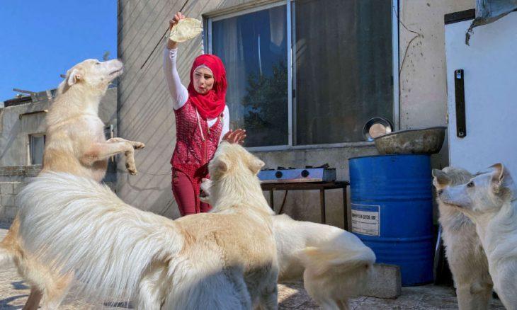 سورية تبيع ما تملك لرعاية 120 قطا و20 كلبا