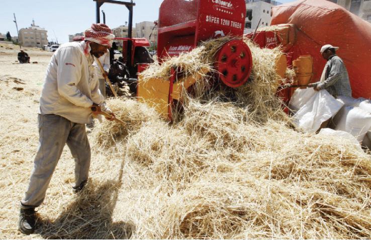 الحكومة تطرح عطاء جديدا لشراء 120 ألف طن قمح