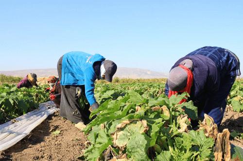 وزير الزراعة تجاوزنا تبعات أزمة جائحة كورونا
